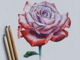 Drawing and Painting A Rose Drawing Rose Jugnu Pinterest