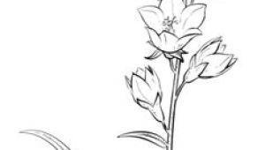Drawing Bell Flowers 1412 Nejlepa A Ch Obrazka Z Nasta Nky Flower Drawings Drawings
