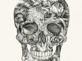 Drawing Bird Skull Aviary and Ivory Skull Drawings Illustration Artwork
