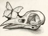 Drawing Bird Skull Bird Skull Instead Of Human Like the Idea Of A butterfly and or Bee