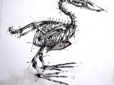 Drawing Bird Skull Skeleton Art Anatomy Bird My Skeleton Anatomy Drawings Anatomy
