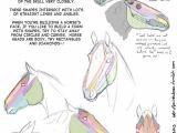 Drawing Cartoon Horse Head Drawing Art Draw Animal Skeleton Anatomy Horse Reference Tutorial