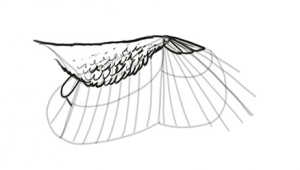 Drawing Cartoon Wings How to Draw and Animate Wings Birds Bats and More Autodesk