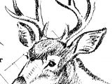 Drawing Deer Eyes Pin by Chand On Animals Pinterest Drawings Animal Drawings and