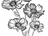 Drawing Detailed Flowers Blooming forest Flowers Detailed Hand Drawn Vector Illustration
