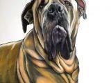 Drawing Dog Colour Pin by Sue Sayne Trimble On Artwork Pinterest Pet Portraits