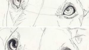 Drawing Dog Eyes Step by Step How to Draw Dog Eyes that Look Amazingly Realistic Drawings