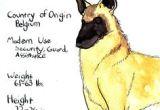 Drawing Dog Malinois 164 Best Dogs Belgian Malinois Images Belgian Shepherd Malinois