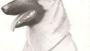 Drawing Dog Malinois Belgian Malinois by Lizzieod On Deviantart
