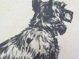 Drawing Dogs Diana Thorne 248 Best Cecil Aldin S Others Vintage Dog Drawings Images Dog