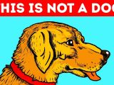 Drawing Dogs Eyes Youtube 11 Optical Illusions that Will Trick Your Eyes Youtube