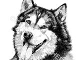 Drawing Dogs In Pen and Ink 123 Best Pen and Ink Drawings Images Pencil Drawings Paintings