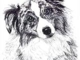 Drawing Dogs In Pen and Ink 43 Best Drawing Dogs Images Australian Shepherd Aussie Dogs