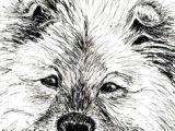 Drawing Dogs In Pen and Ink 491 Best Draw Dogs Images In 2019 Drawings Animal Drawings Draw