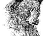 Drawing Dogs In Pen and Ink Animals Drawn In Pen Creativity In 2019 Pinterest Drawings