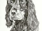 Drawing Dogs In Pencil Dog Sketch Done In Pencil Dogs Pinterest Artwork Pet