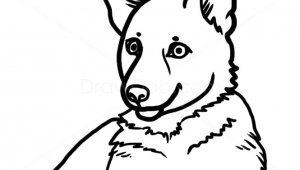 Drawing Dogs Simple How to Draw Puppy German Shepherd Dogs and Puppies Drawings In