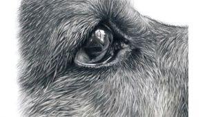 Drawing Dogs Youtube How I Draw Dogs Eyes Youtube Drawing Oa I Zva A ata Barvy