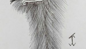 Drawing Duck Eyes Ostrich Painting Drawing Inspo Drawings Pen Art Art