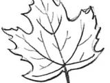 Drawing Easy Leaves 1957 Best Drawing Lessons for Kids Images In 2019 Art Lessons