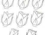 Drawing Easy Roses Step by Step How to Draw A Rose Dr Odd