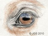 Drawing Eye sockets Draw Horse Eyes Step by Step