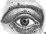 Drawing Eyes Reddit 3878 Besten Eyes Bilder Auf Pinterest In 2019 Psychedelic Collage