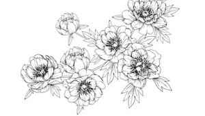Drawing Flowers and Fruits 461 664 Flower Line Flower Line Drawing Images Royalty Free Stock