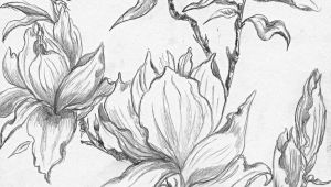 Drawing Flowers and Trees From A Selection Of Henny S Magnolia Drawings and Sketches