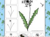 Drawing Flowers Kindergarten 588 Best Draw Flowers N Nature Images In 2019 Draw Drawing Ideas
