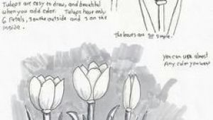 Drawing Flowers Lesson Plans Adron S Art Lesson Plans How to Draw Tulips A Beginners Drawing