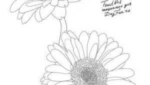 Drawing Flowers Lessons How to Draw Gerberas Step by Step 4 Watercolor Drawings Art