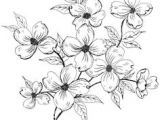 Drawing Flowers On Wood 18 Best Dogwood Images Dogwood Flowers Dogwood Flower Tattoos