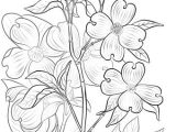 Drawing Flowers On Wood Flowering Dogwood Coloring Page Art