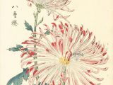 Drawing Flowers On Wood Keika Hasegawa Chrysanthemum Wood Block Prints 1893 Flowers