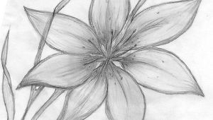 Drawing Flowers Psychology Pencil Drawings Of Flowers Maebelle Portfolio Lily Pencil