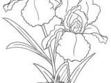 Drawing Flowers Template 58 Best Draw Flowers Images Flower Designs Quote Coloring Pages