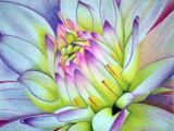 Drawing Flowers with soft Pastels soft Pastel Drawings Recherche Google Dahlia Sunflower Rose