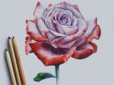 Drawing Flowers with Watercolor Pencils Drawing Rose Art Drawi