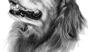 Drawing Golden Dog Abby the Golden Retriever Dog Art Sketch Art Inspiration