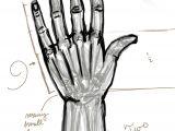 Drawing Hands Basic Shapes Art Studies Hands Samuel Perin Art