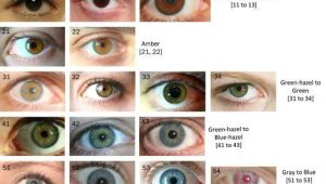 Drawing Hazel Eyes the Eye Color Chart Drawing Heads Faces Hair Eye Color