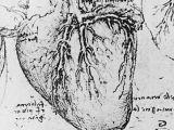 Drawing Heart with Blood Heart and Coronary Arteries Leonardo Davinci Art Science