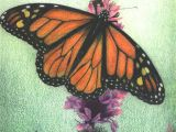 Drawing Ideas Colourful Monarch butterfly Colored Pencil On Drawing Paper by Amber D