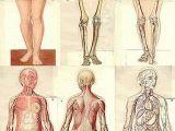 Drawing Ideas Human Body Anatomical1937 Jpg Pinterest Anatomy Human Anatomy and Drawing
