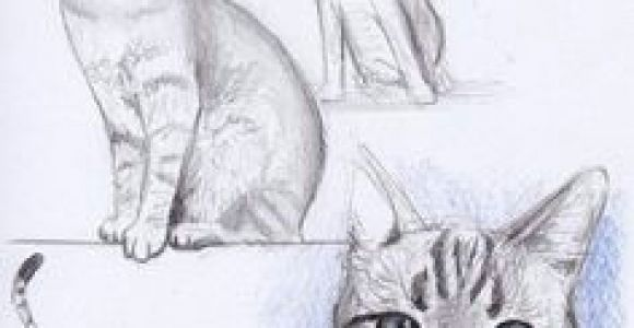 Drawing Ideas Kitten 1294 Best Cat Drawing Images In 2019 Drawings Sketches Of Animals