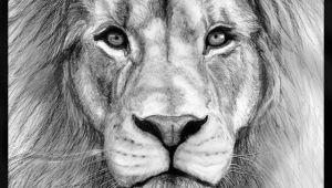 Drawing Ideas Realistic Animals Realistic Drawings Of Animals 42 Incredibly Realistic and Adorable