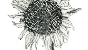 Drawing Ideas Sunflower Sunflower Drawing Google Search Art Inspiration Pinterest