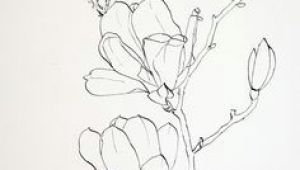 Drawing Images Of Different Flowers 61 Best Art Pencil Drawings Of Flowers Images Pencil Drawings