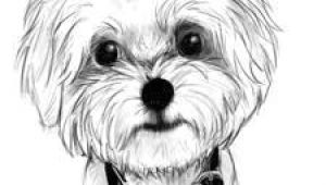 Drawing Maltese Dogs 71 Best Maltese Images Dog Paintings Drawing S Drawings Of Dogs